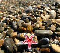 Значок Морская звезда